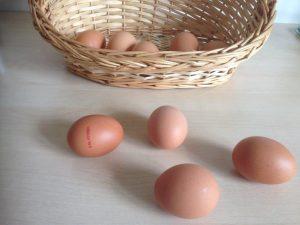 Risikostreuung ist sowohl an der Börse als auch für freie Journalisten wichtig. Daher niemals alle Eier in einen Korb legen. Bild: Timo Stoppacher